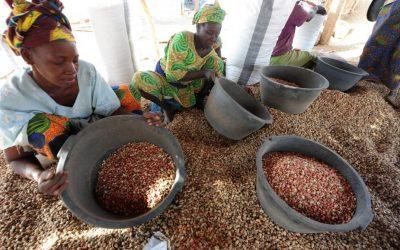 Kaffrine : un promoteur veut acheter plus 200000 tonnes d'arachide cette année